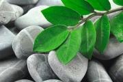 blätter auf steinen
